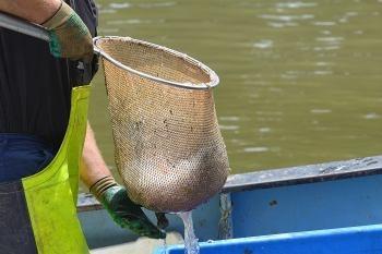 Fischer mit vollem Netz